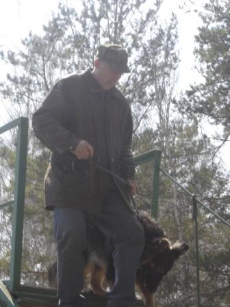 Старонемецкая овчарка - Атос.